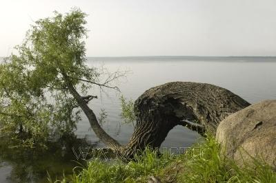 Тропинка вдоль реки фильм